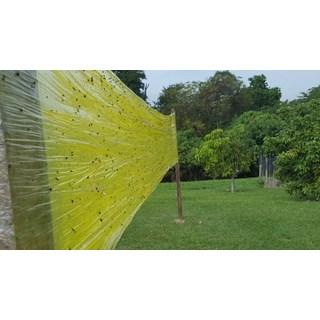 Cola Entomológica Amarela Colly Yellow Glue para Captura de Insetos