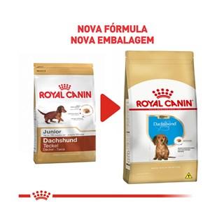 Ração Royal Canin Dachshund Junior Para Cães Filhotes